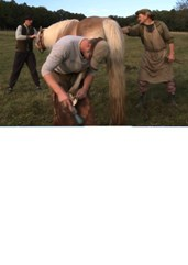 Kobila dobila nova kopita